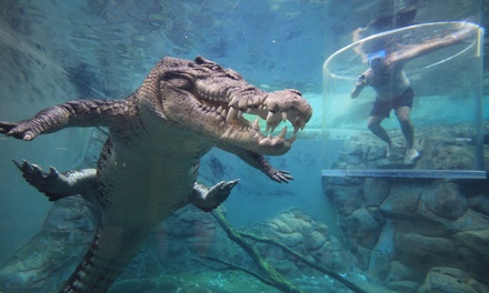 Darwin: Crocodile Cove Entry, Tour or 'Cage of Death' Experience for One or Two at the Award-Winning Crocosaurus Cove