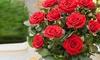 Lot de 3 pots de roses
