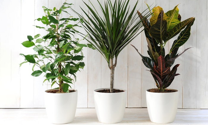Three Scandi House Plants Groupon