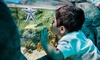 Sea Life Kansas City - Downtown Kansas City: Admission for One Adult or Child at Sea Life Kansas City (Up to 30% Off)