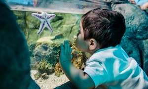 SEA LIFE Aquarium Kansas City: Admission for One Adult or One Child at Sea Life Kansas City (Up to 30% Off)