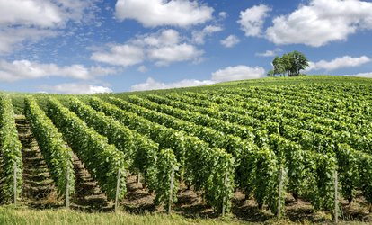 Wine and Distillery Tour for One ($109) or Deluxe Tour for Four People ($516) from Pineapple Tours (Up to $640 Value)