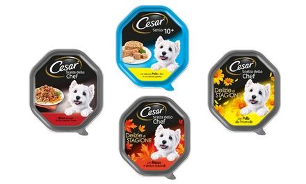 Fino a 28 confezioni di cibo per cani adulti Cesar disponibili in vari gusti