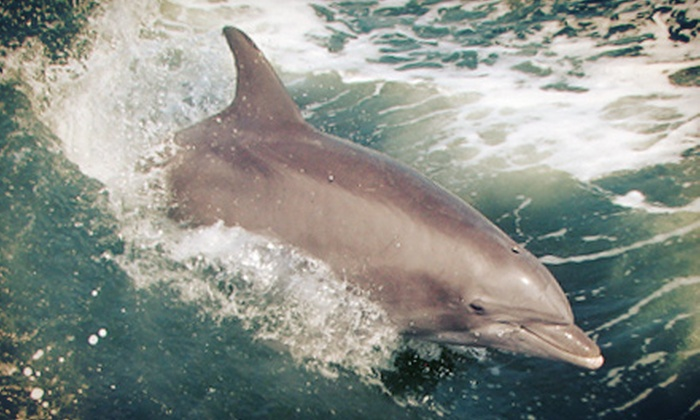 Sightseer Whale & Dolphin Trips - Wildwood: Whale- or Dolphin-Watching Cruise for Two, Four, or Six from Sightseer Whale & Dolphin Trips (Up to 65% Off)