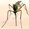 Up to 78% Off Mosquito Barrier Spray Program