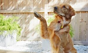 Boston Dog University: $88 for Puppy Socialization Classes from Boston Dog University ($160 Value)