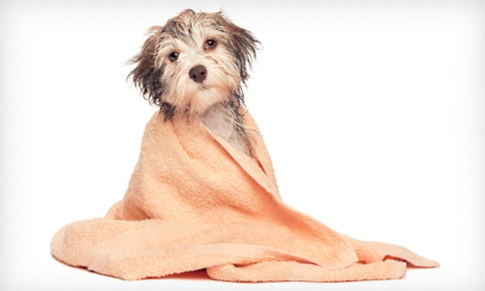 Nature's Pet Grooming - Multiple Locations: Two Baths with Pedicure and Ear Cleaning for Small, Medium, or Large Dogs at Nature's Pet Grooming (Up to 69% Off)