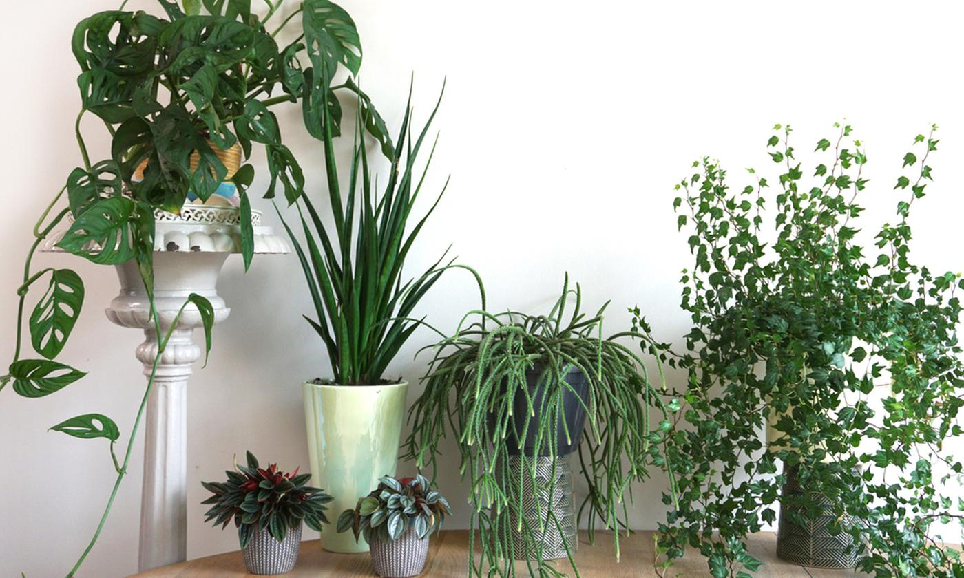 Set of Five Different Easy-Care Plants