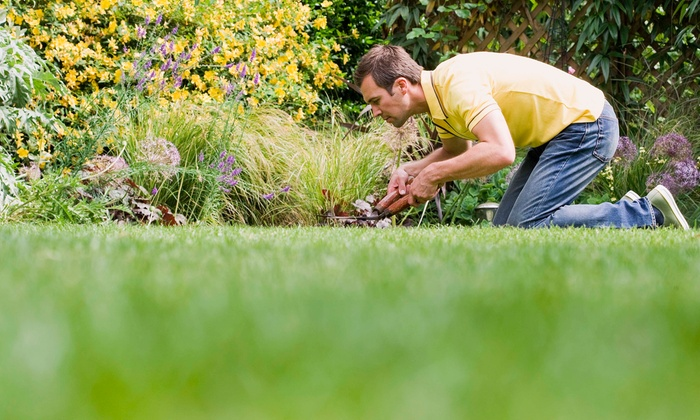 A Total Lawn Care - Fort Lauderdale: One Man-Hour of Landscaping from A Total Lawn Care (43% Off)