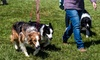 Up to 37% Off at Rural Hill Sheepdog Trials and Dog Festival