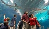 Up to 41% Off Annual Passes to Newport Aquarium