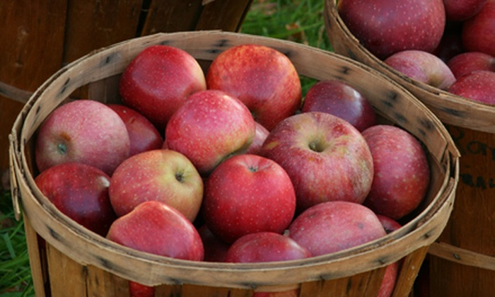 Armstrong Apples Orchard and Winery - Campbellsport: $13 for 3 Pounds of Fresh Apples and a 10-Minute Zorb Ball Ride at Armstrong Apples Orchard and Winery (Up to $26 Value)