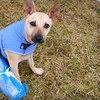 (Grassroots) Dane County Humane Society - Madison: If 40 People Donate $10, Then Dane County Humane Society Can Provide One Day's Worth of Food and Shelter for 40 Animals