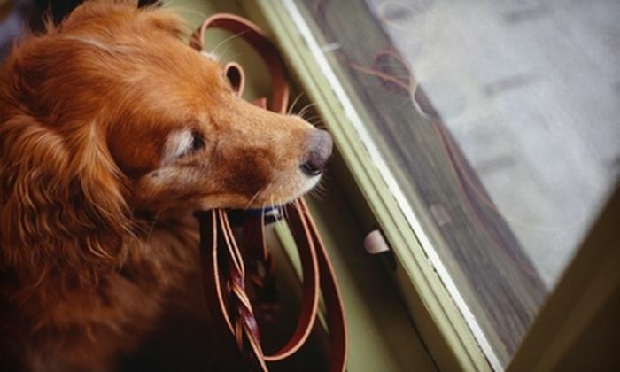 Back Bay Dog Walking - Boston: Dog Services at Back Bay Dog Walking. Three Options Available.