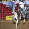 Up to Half Off Rodeo Admission in Fort Worth