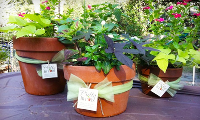 Pretty in Pots - Baton Rouge: Home Delivery of Potted Plants and Flowers in an 8-, 10-, or 12-Inch Pot from Pretty in Pots