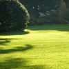 The Green Guardian: $30 Worth of Lawn-Nourishing Services
