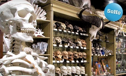 $20 Groupon to The Evolution Store - The Evolution Store in Manhattan