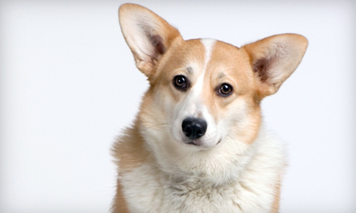 Best Friends Animal Hospital - Royal Greens at Gateway Condominiums: Grooming Package for a Small-, Medium-, or Large-Sized Dog at Best Friends Animal Hospital (Half Off)