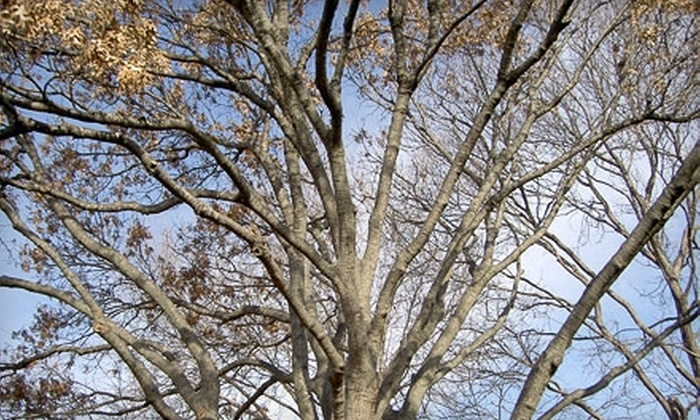 Natural Environments Landscaping - North Dallas: $249 for $500 Worth of Tree Trimming from Natural Environments Landscaping