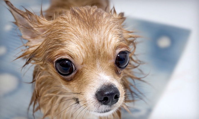 Pet Paw's - Deerfield: Two Self-Serve Dog Washes for a Dog up to 50 Pounds or a Dog up to 75 Pounds at Pet Paw's (Half Off)