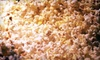 Popcorn Fharmacy - Oklahoma City: $7 for $15 Worth of Popcorn at Popcorn Fharmacy