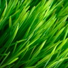 Up to 60% Off Lawn Aeration from Custom Spray
