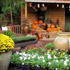 Half Off Plants, Gardening Supplies and Gifts