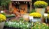 Habersham Gardens - Lindridge - Martin Manor: $15 for $30 Worth of Plants, Gardening Supplies, and Gifts at Habersham Gardens