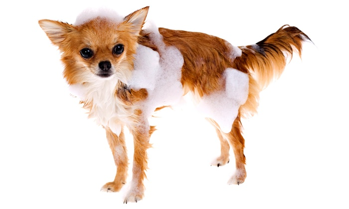Canine Suds and Go - Chevy Chase: $13 for $25 Worth of Pet Grooming at Canine Suds and Go