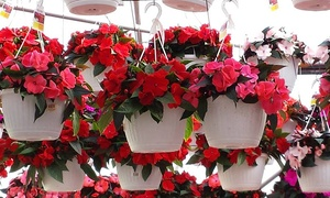 HUIZENGA BROS GREENHOUSES& GARDEN CENTER: $15 for Two 10-Inch Hanging Plant Baskets at Huizenga Bros Greenhouses & Garden Center ($23.98 Value)