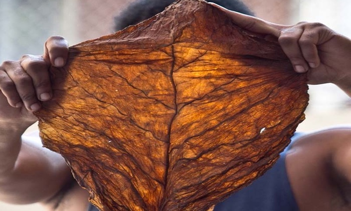 The Original Fronto Leaf - Gerald Blaise: One or Two Smoker's Kits at The Original Fronto Leaf (Up to 32% Off)