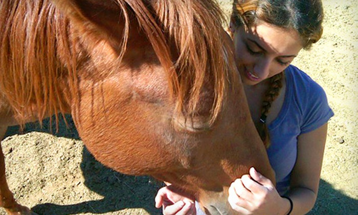 Dude's Ranch Equine Rescue Center - Acton: $55 for Choice of Horseback Trail Ride or Lesson from Dude's Ranch Equine Rescue Center in Acton (Up to $130 Value)