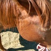 Choice of Two-Hour Horseback Trail Ride or Lesson
