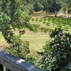 Up to 60% Off Winery Tour & Tasting in Monroe