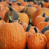 Half Off Fall Farm Outing in Middletown