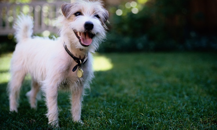 DK Grooming - South Bradenton: Grooming Package for a Small, Medium, or Large Dog at DK Grooming in Bradenton (Up to 53% Off)