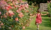 $6 for Roses Gone Wild Walking Tour
