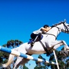 Up to 62% Off Horse-Riding Lessons in Waxhaw