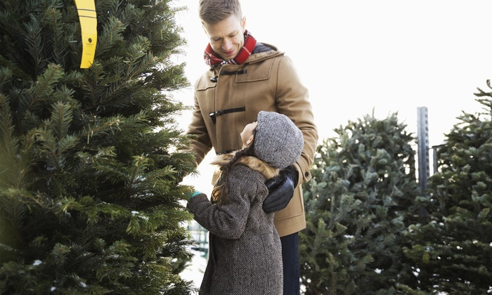 North Pole Christmas Tree Lot - Multiple Locations: Christmas Trees at North Pole Christmas Tree Lot (Up to 50% Off). Five Options Available.