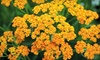 High Country Gardens - Academy East Industrial Park: $20 for $40 Worth of Locally Grown Perennial Plants at High Country Gardens