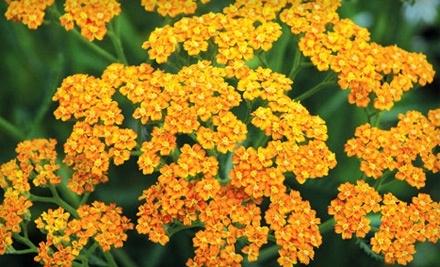 $40 Groupon to High Country Gardens - High Country Gardens in Albuquerque