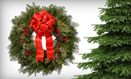 7' Fraser Fir Tree, Fraser Fir Wreath, Tree Stand, and 1 Box of Christmas Lights - Anthony Gallo Nurseries in