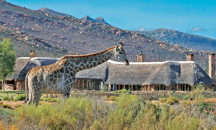 Aquila Private Game Reserve - Aquila Private Game Reserve: Buffet Lunch and Day Trip Safari from R650 at Aquila Private Game Reserve (50% Off)