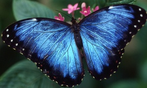 Houston Museum of Natural Science: Butterfly Center or Planetarium Visit for Two, Four, or Six at Houston Museum of Natural Science (Up to 47% Off)