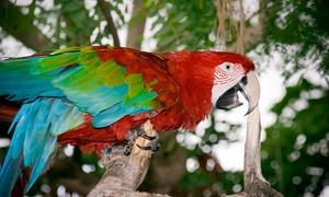 Papugarnia Łódź Papupapi: Bilet wstępu do papugarni lub mini zoo oraz placu zabaw od 8,99 zł i więcej w Papugarnia Łódź Papupapi