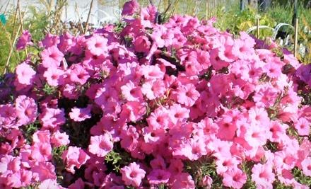 $20 Groupon to Tower Perennial Gardens - Tower Perennial Gardens in Spokane