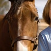 Up to 60% Off Horseback Riding in Pleasureville