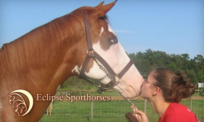 Eclipse Sporthorses - Newberry-Archer: $30 for a One-Hour Horseback Ride at Eclipse Sporthorses in Archer ($60 Value)