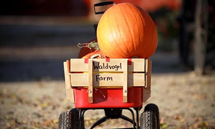 Waldvogel's Pumpkin Farm - Burnett: $15 for $30 Worth of By-the-Pound Pumpkin Picking at Waldvogel's Pumpkin Farm